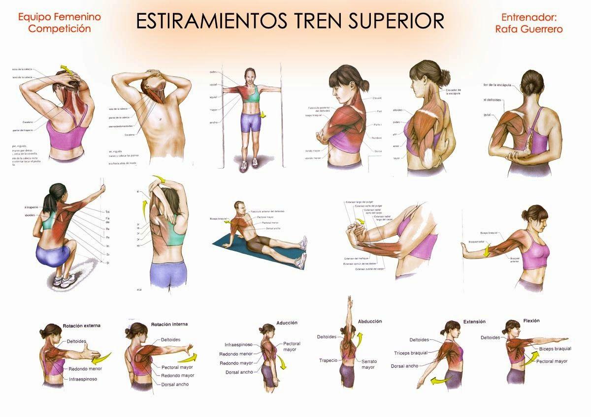músculos del tren inferior y como elongarlos