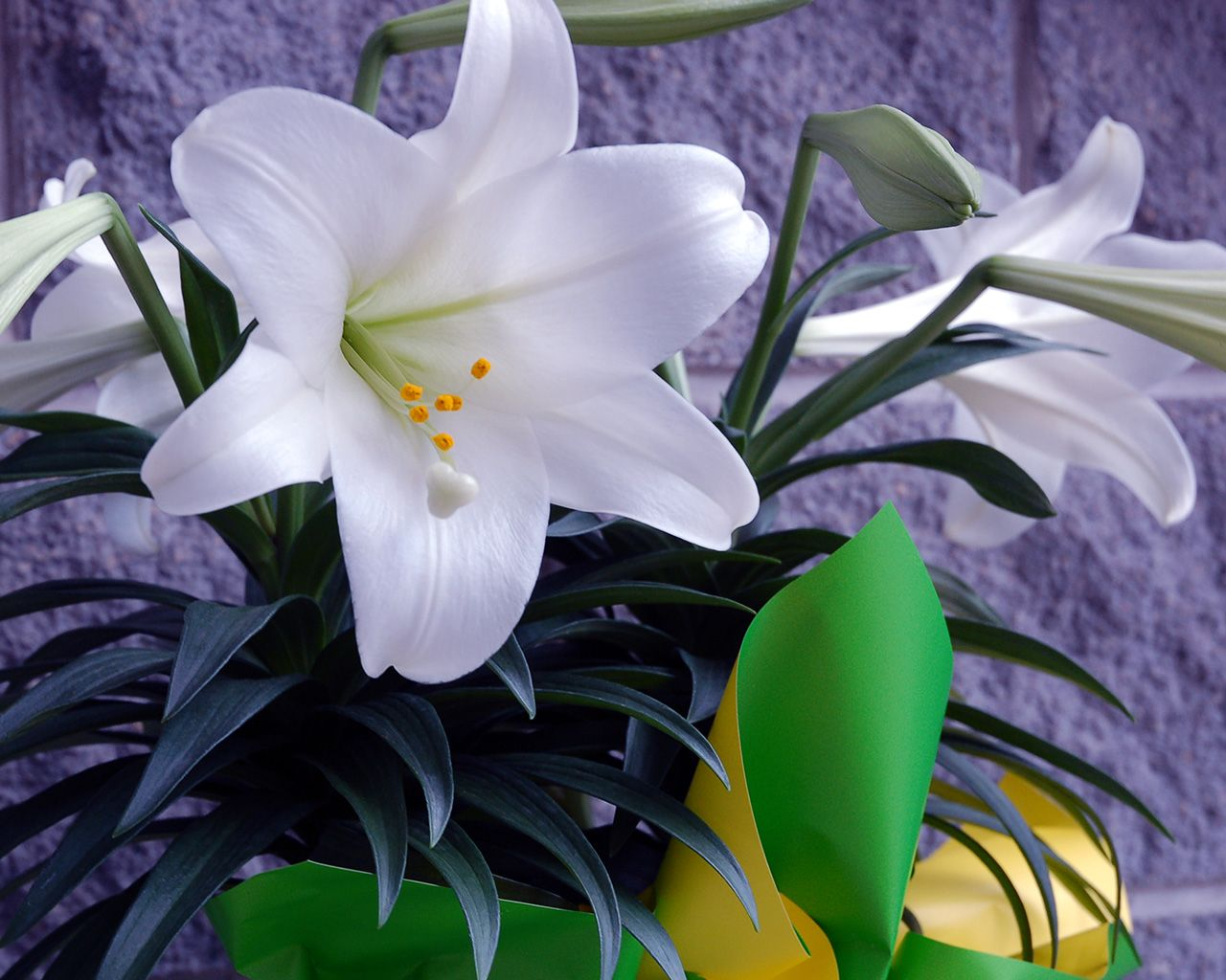 easter lily images - Bing Images
