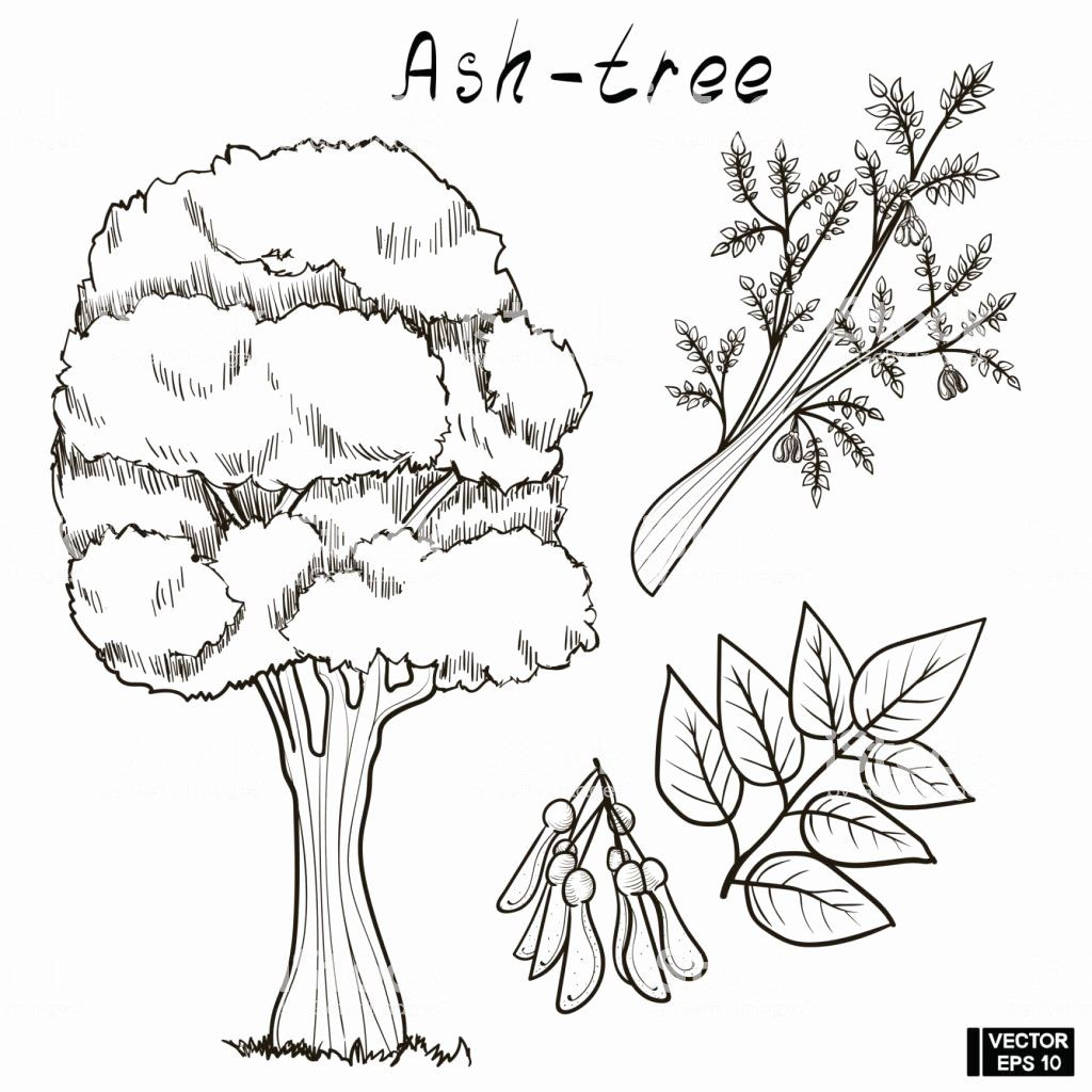 Coloring Page Tree With Roots In 2020 Tree Coloring Page Leaf