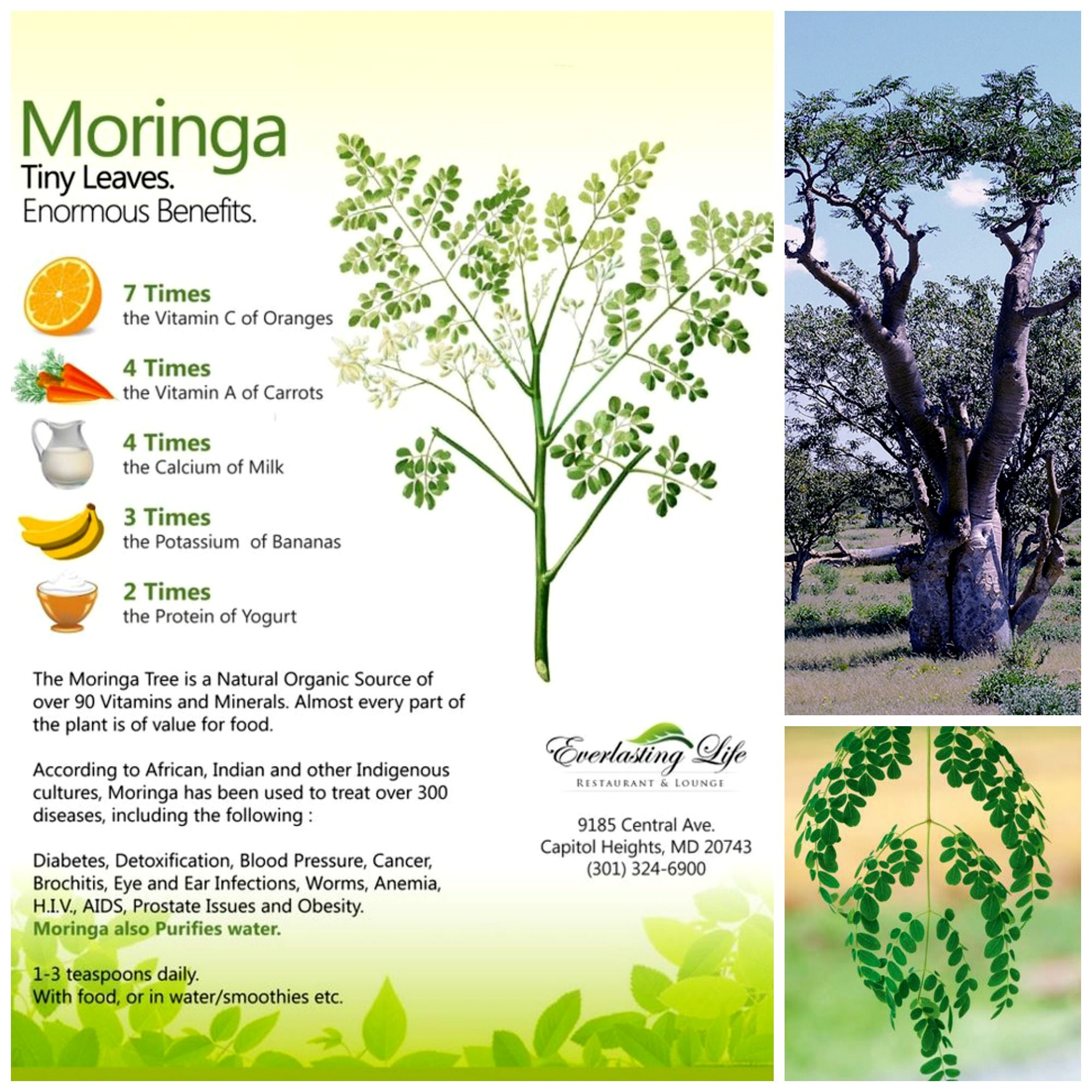 Moringa Oleifera The Common Miracle Let Us Introduce This Strange Sounding Plant To You In A Familiar Term Dr Moringa Tree Medicinal Plants Flowering Trees