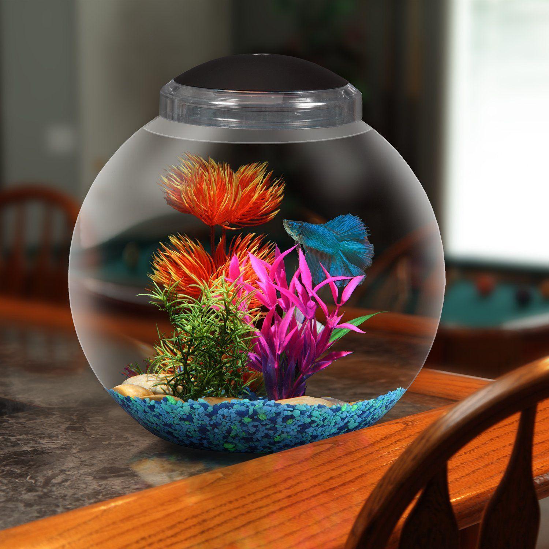 Kits Betta Fish Aquarium