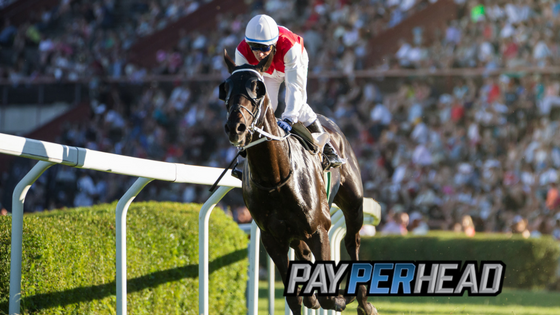 Pin by PayPerHead on Bookie Tips Race book, Tips, Horses