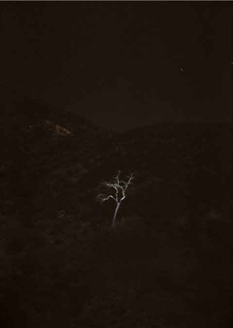 Trees, Stars, and Birds by Matt Shallenberger