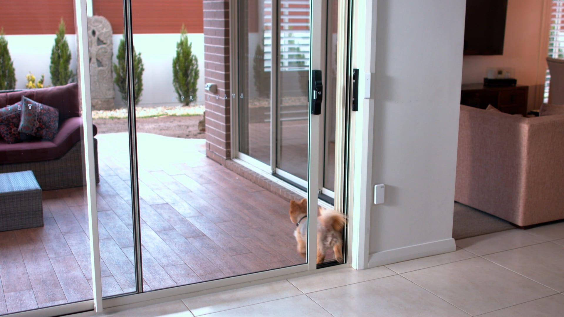 Pet Sliding Doors - Automatic Sliding Doors by Autoslide ...