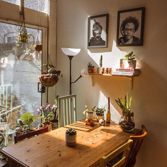 """Luis Viajante • Vintage Shop on Instagram: """"Plants at home enjoying the afternoon sun�️ We have been a bit busy and therefore the lack of updates. Nevertheless we are still fully…"""""""