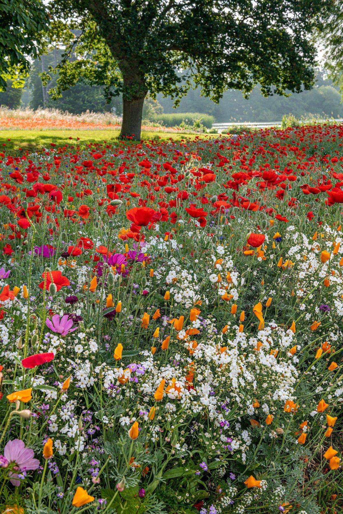Photo of Meadow Flowers