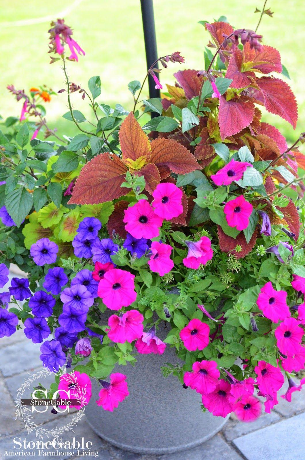 THE ANATOMY OF A FLOWER POT | Anatomy, Sweet potato vines and Potato ...