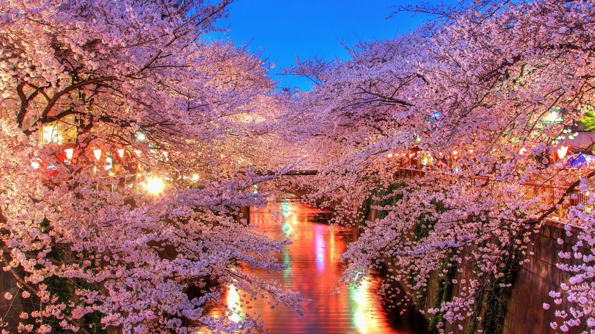 Japanese Cherry Blossom Wallpaper 1080p
