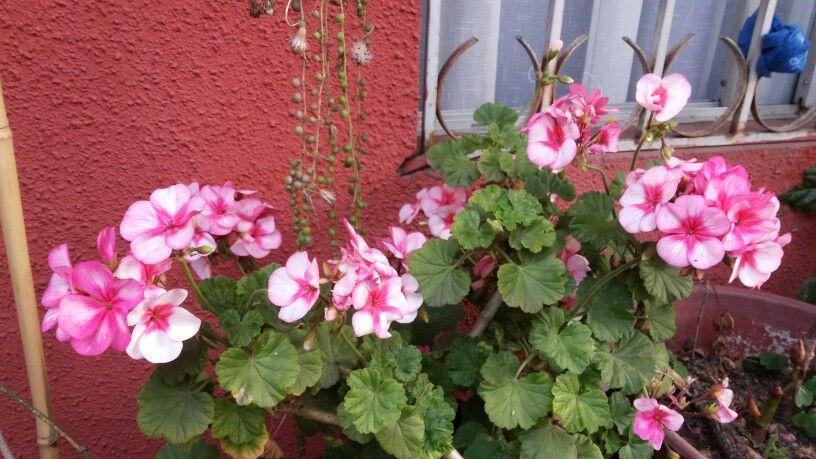 jeranios de jardines con nomos