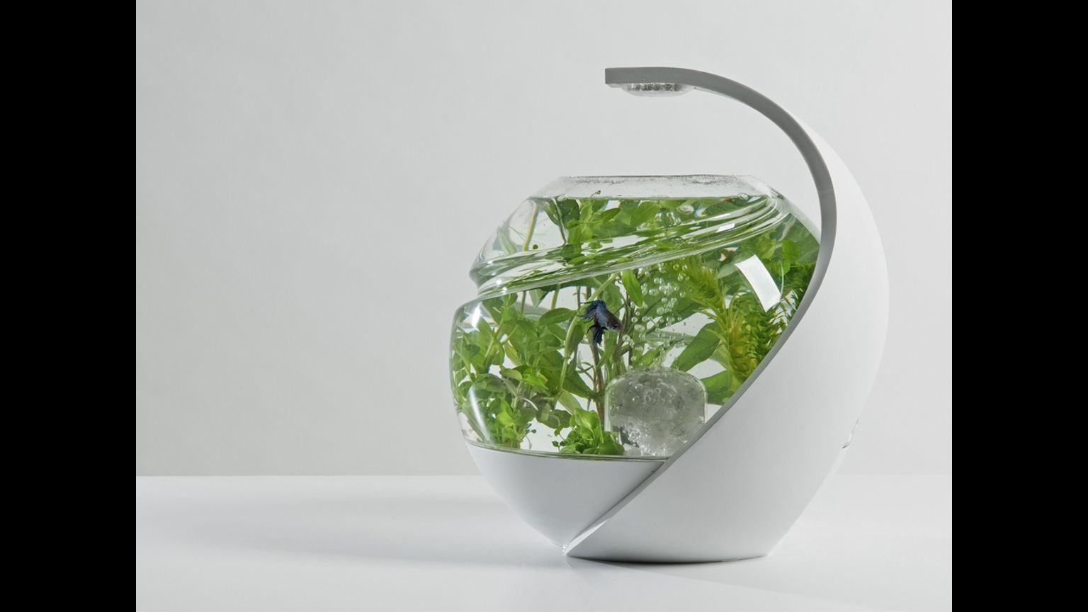 Avo is a unique selfcleaning fish tank. It requires no