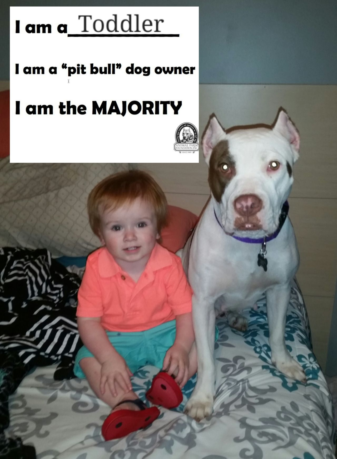 Iamthemajority Pitbull Owners Animals For Kids Bully Breeds