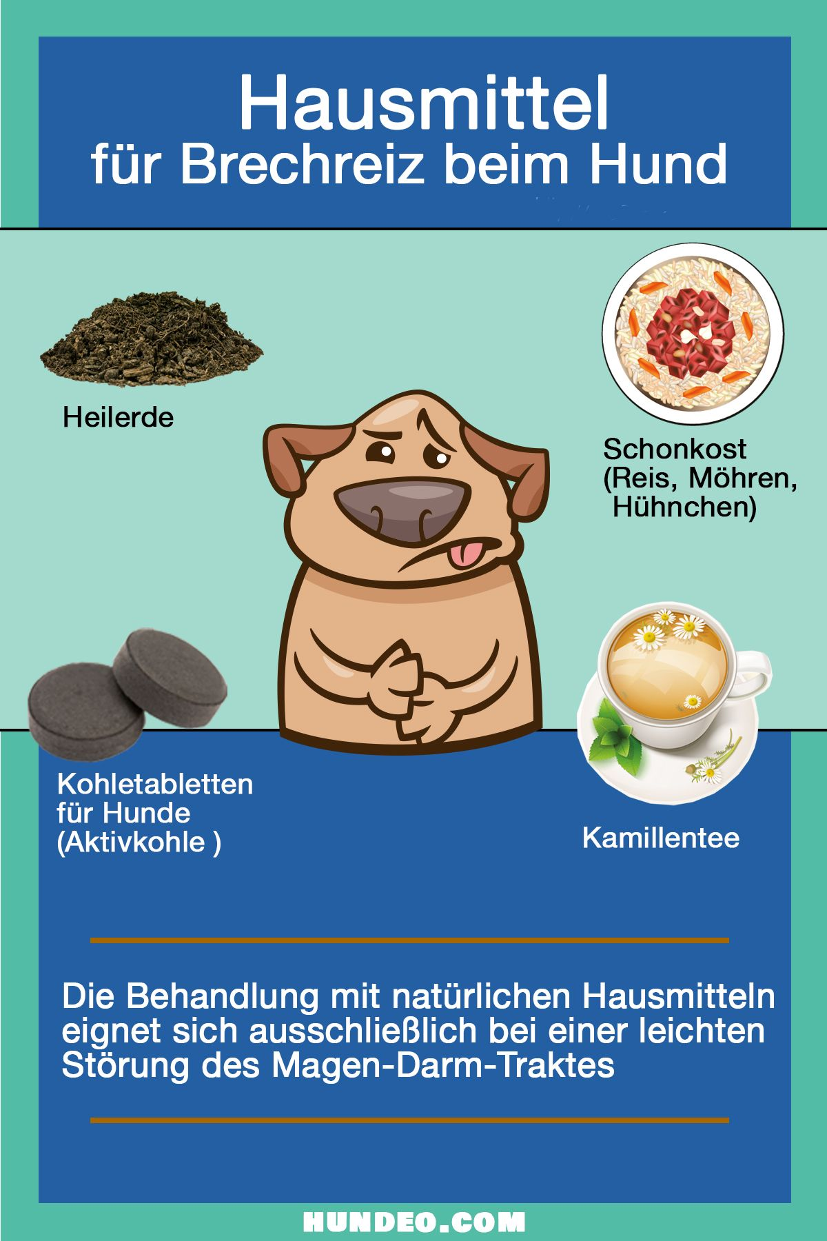Photo of Is your dog vomiting? [Was du tun kannst]