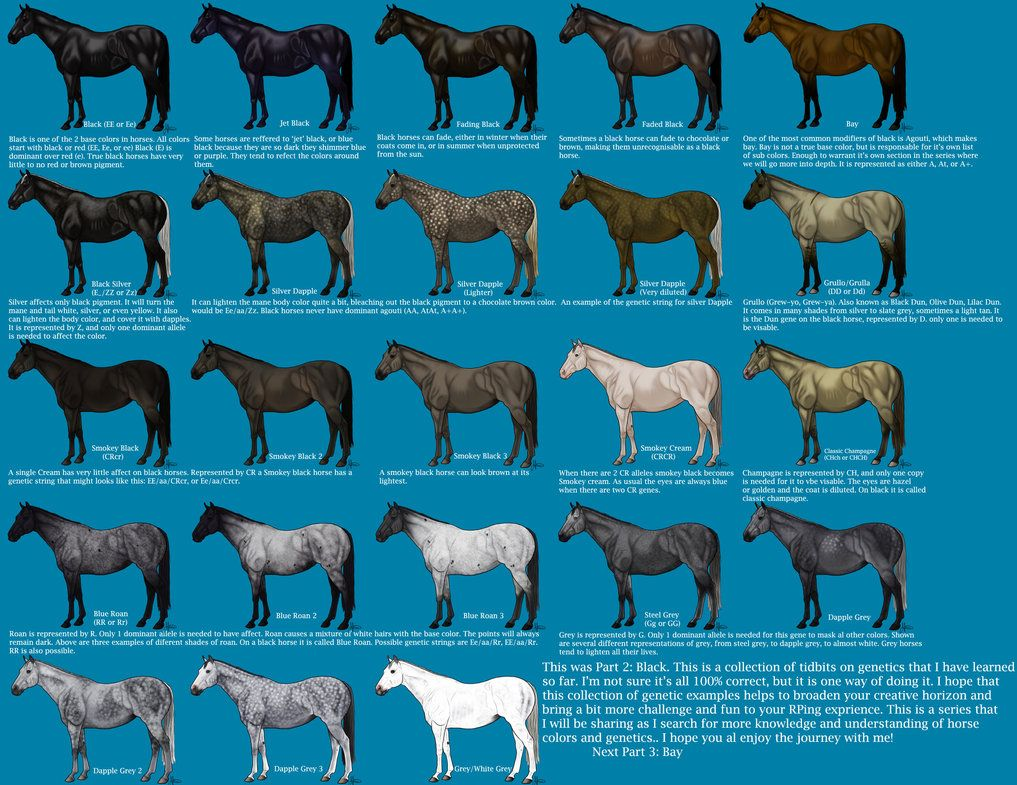 Black Color Genetics Chart By Magicwindsstables On Deviantart Horse Color Chart Horse Coloring Horse Coat Colors