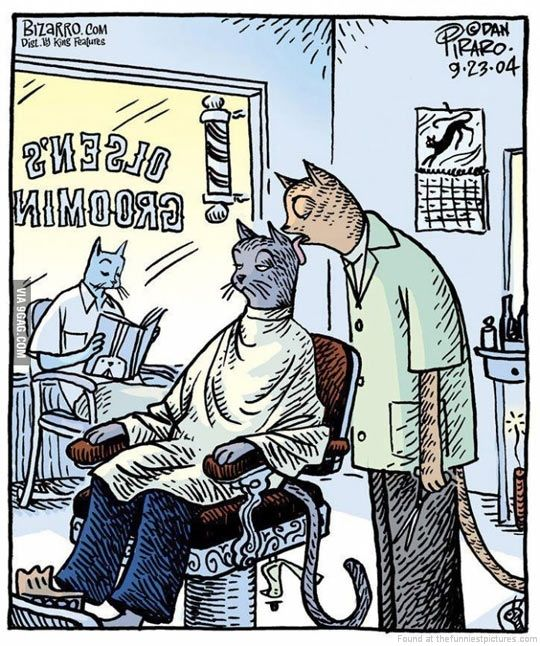 Funny Barber Quotes Funny Animal Pictures Funny Animals Cartoon Cat