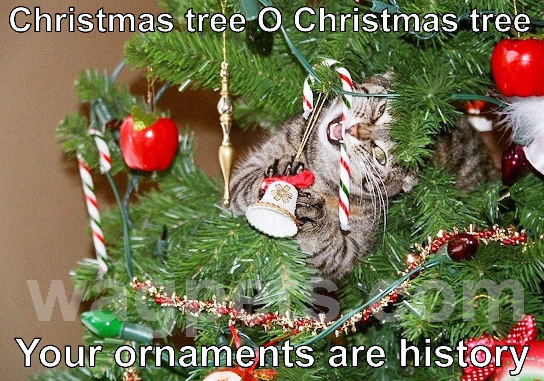 Christmas Tree O Christmas Tree Your Ornaments Are History Christmas Cats Cat Christmas Tree Christmas Humor