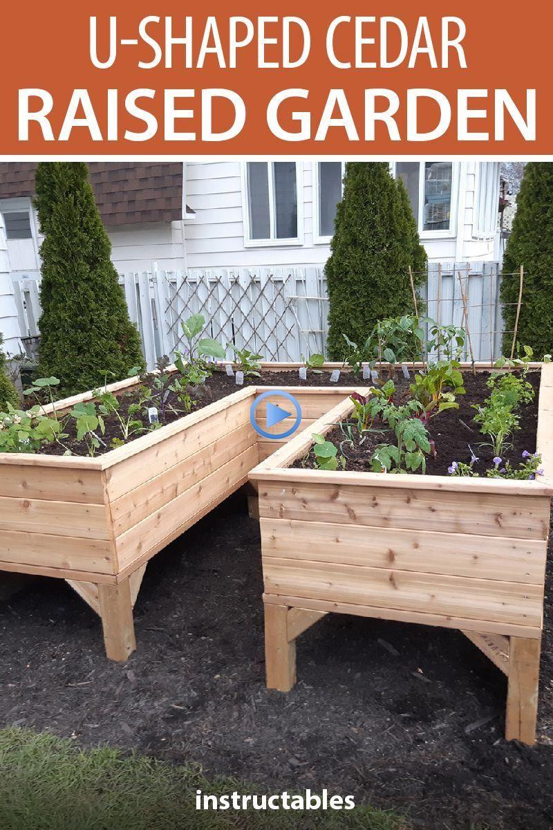 Save Your Back: U-shaped Cedar Raised Garden #vegetable in ...