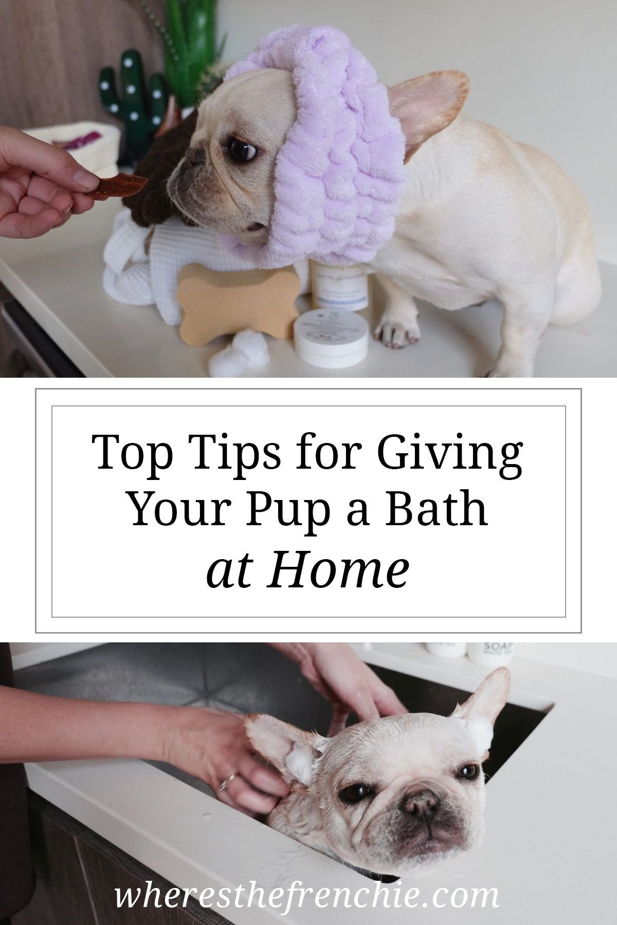 How To Bathe Your Dog Properly At Home Happy Animals Bathing A