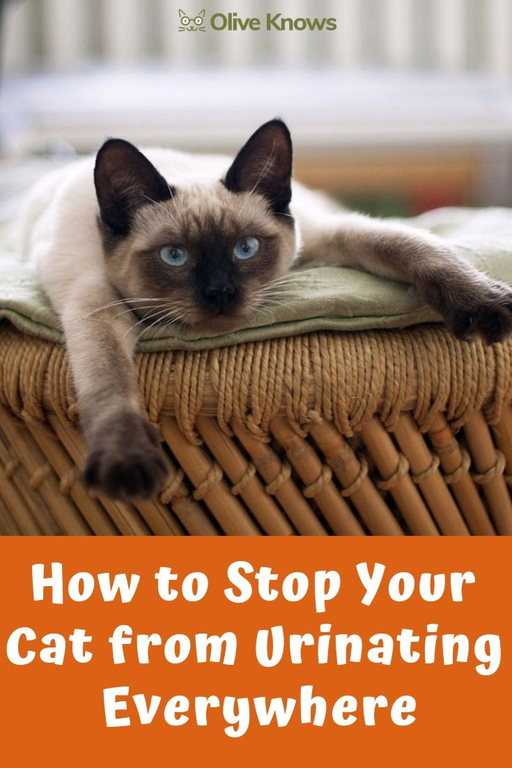 How to Stop Your Cat from Urinating Everywhere Cats