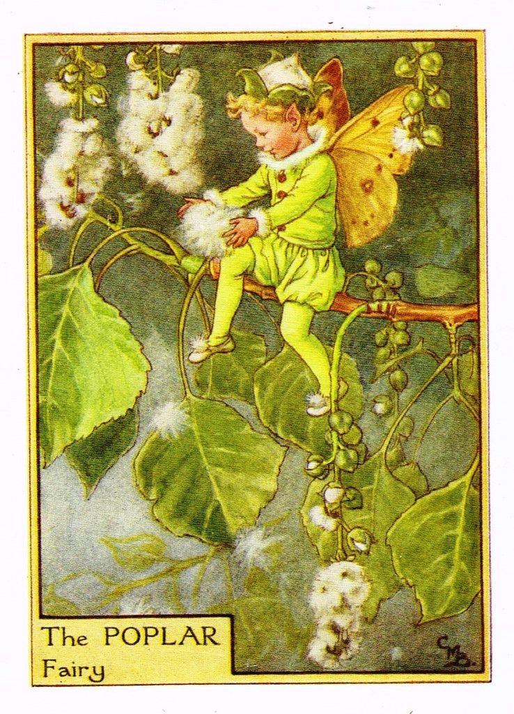 Speedwell Fairy by Cicely Mary Barker Spring Flower Fairies c1935 old print