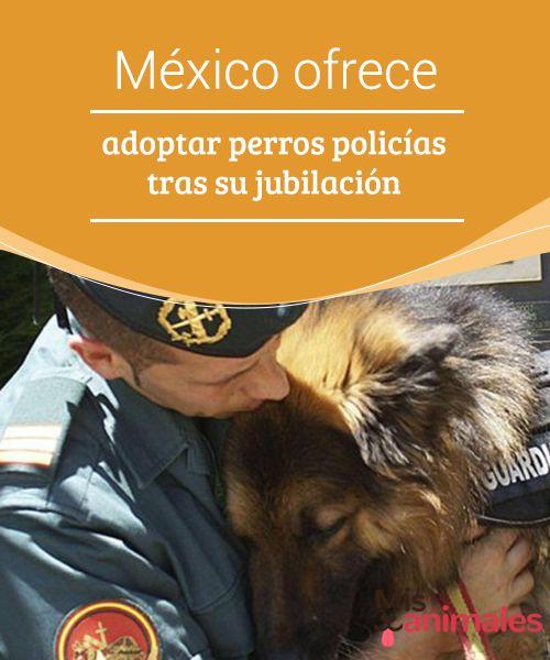 México ofrece #adoptar #perros policías tras su jubilación  Los animales son de gran ayuda para las fuerzas #policiales y #militares de todos los países. Pero llega un momento en que son pasados a retiro. A veces no encuentran un hogar que los ame durante sus últimos años. Por este motivo en #México se lanzó una #propuesta para adoptar perros policías tras su jubilación.