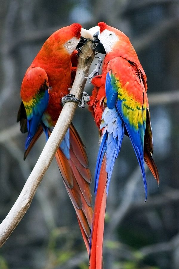 LoveParrots by Jesse Soll on 500px