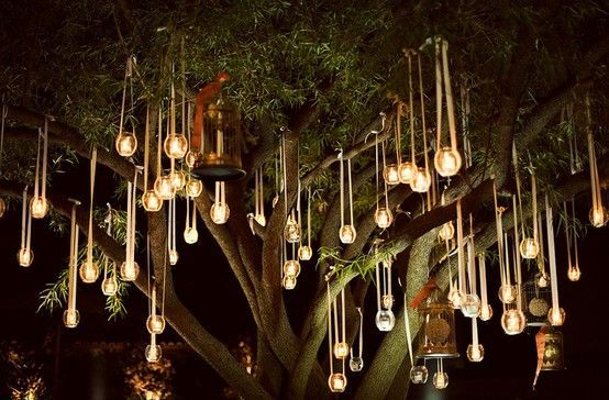 lights hanging from trees wedding - Google Search | Bist Reception ...