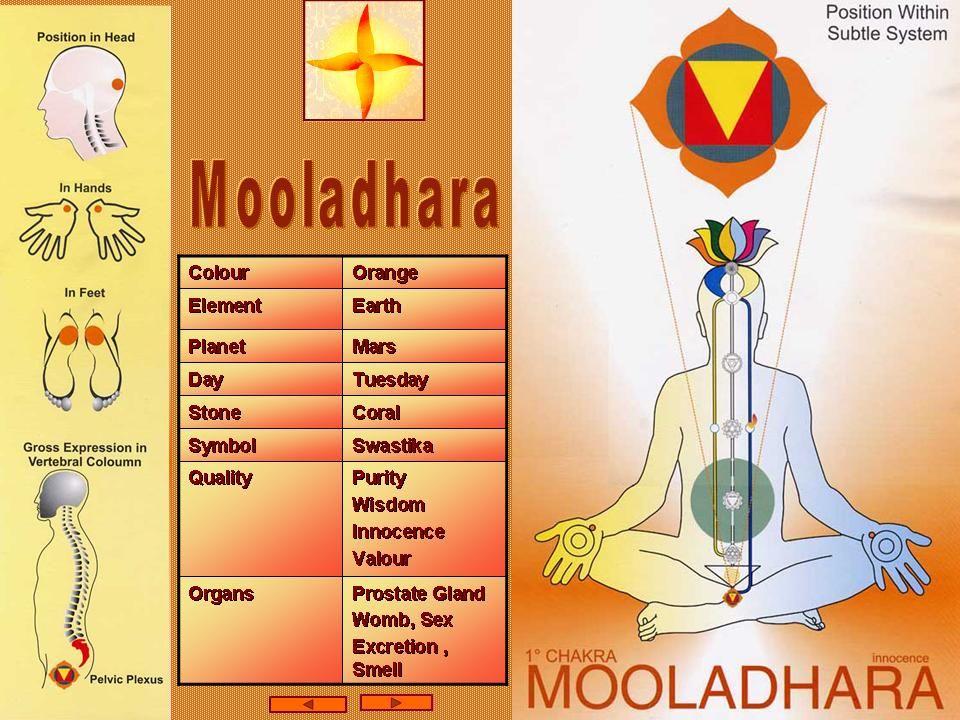 Risultati immagini per Muladhara Chakra