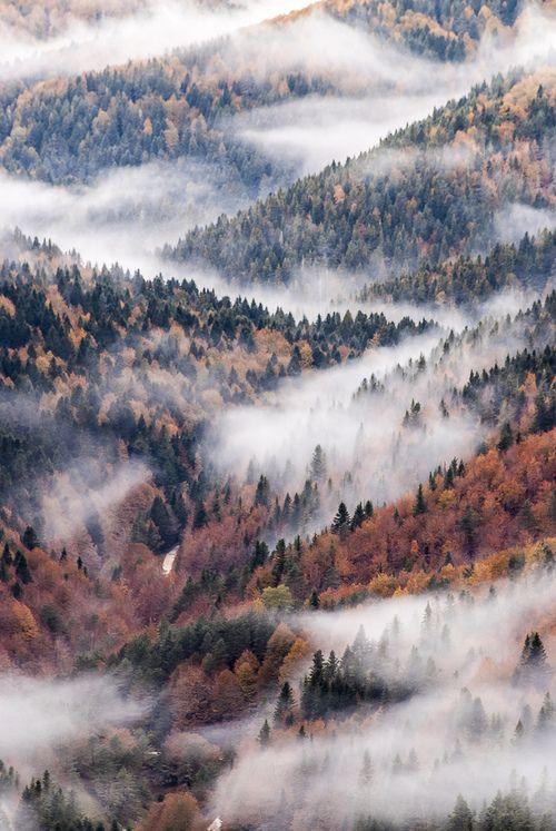Irati woods, Navarre, Spain