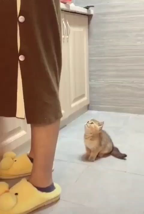 LaDY IS BrutALLy aTtacKED by a DeADLy PReDAtOr