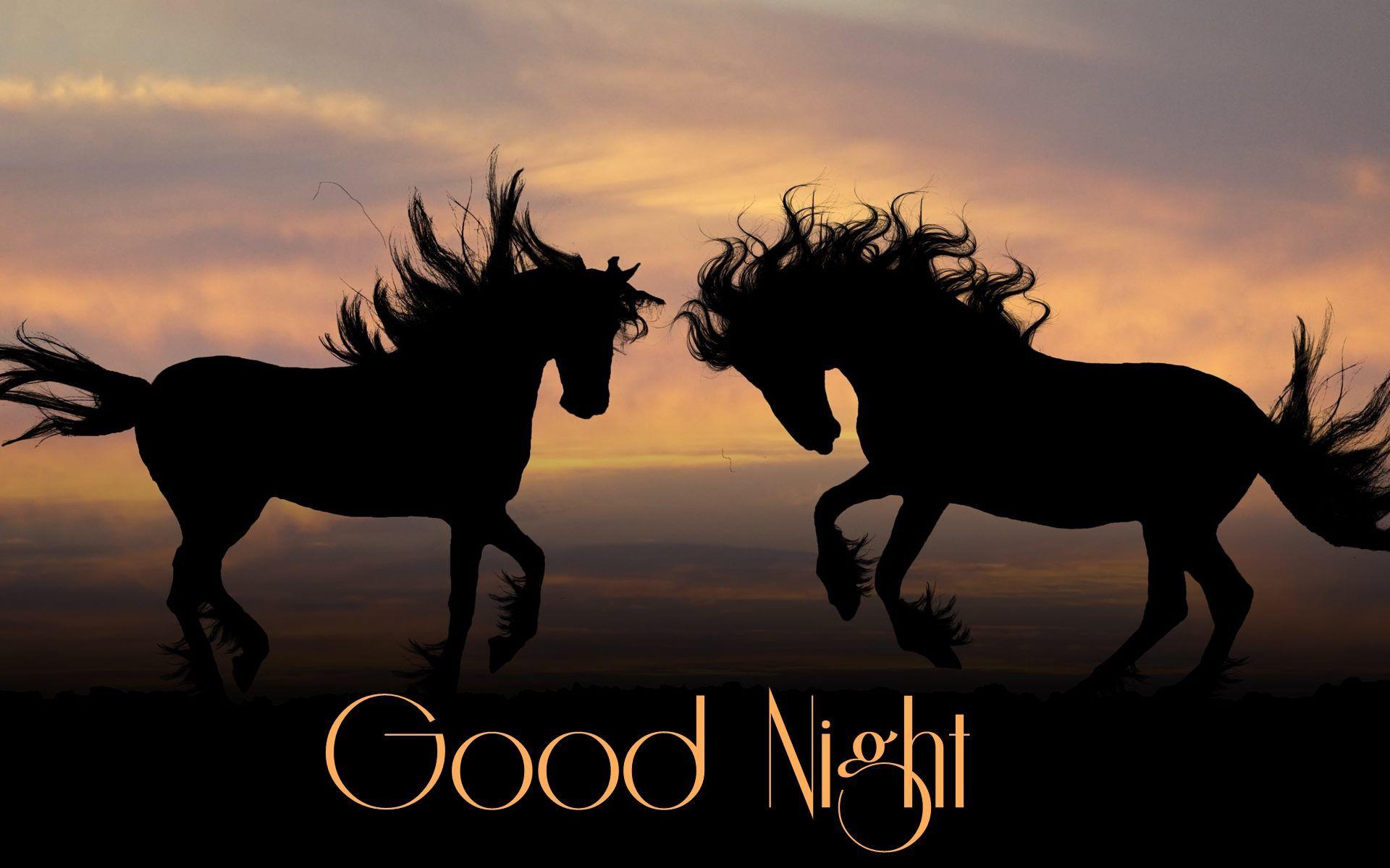 Good Night Beautiful Horses Hd Wallpaper 00225 Wallpaper K Com