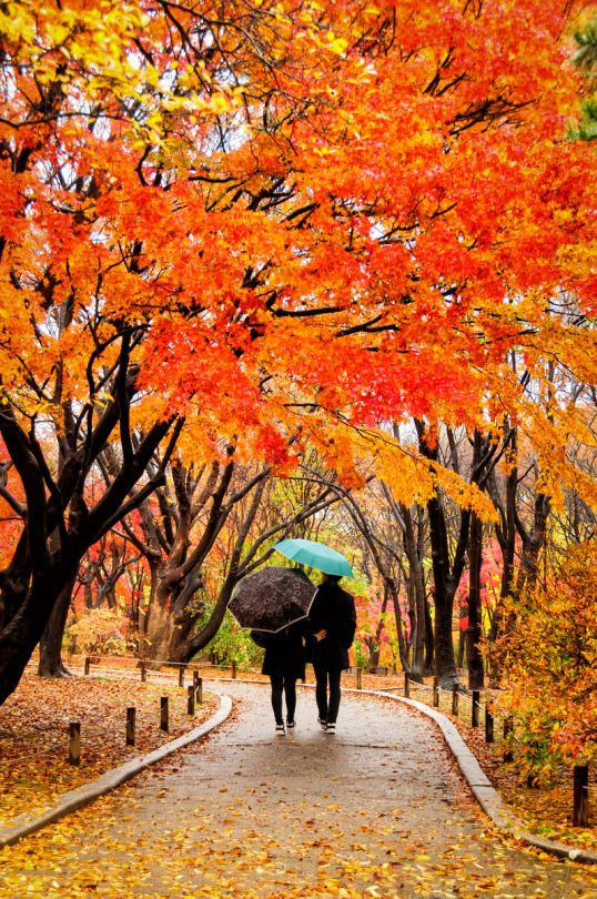 Strolling beneath the autumn foliage, Changgyeonggung Palace, Seoul.