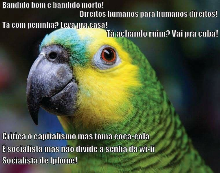 Pin By Edu On Politica Filosofia African Grey Homing Pigeons Parrot