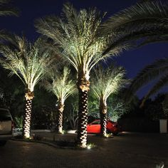 Palm Tree Solar Upright Lighting Google Search Plant