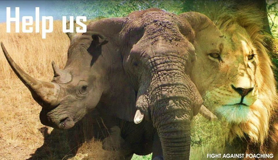 Our Precious African ELEPHANT, RHINO, LION Are All In