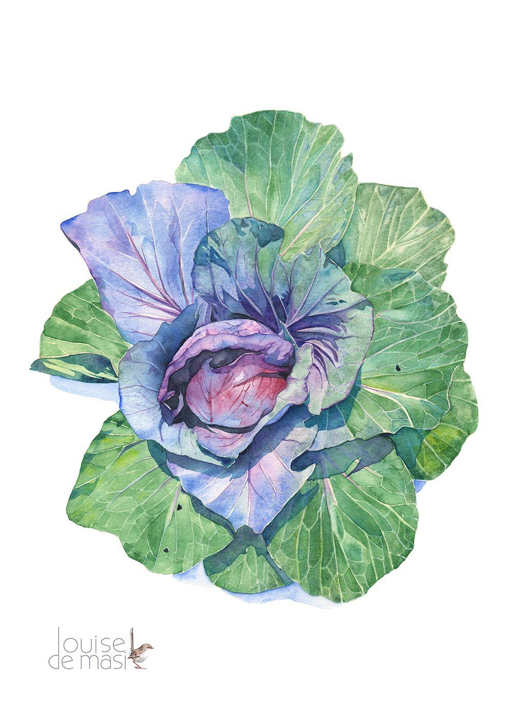 Cabbage En 2020 Aquarelle Dessin Et Peinture