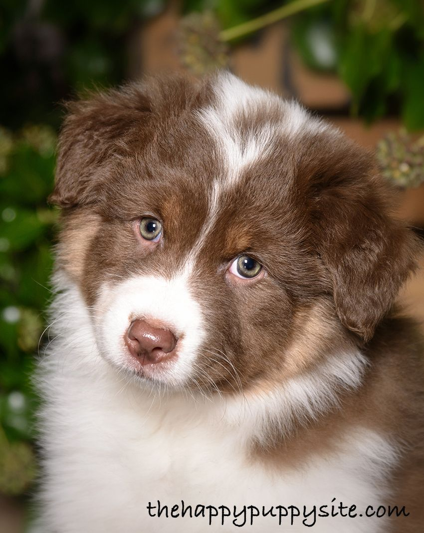 Dog Dandruff Symptoms Know The Signs And How To Treat Them Dog Dandruff Puppy Dandruff Cat Care