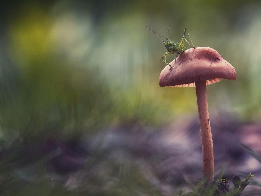 Untitled by Nikolai Gerchev on 500px