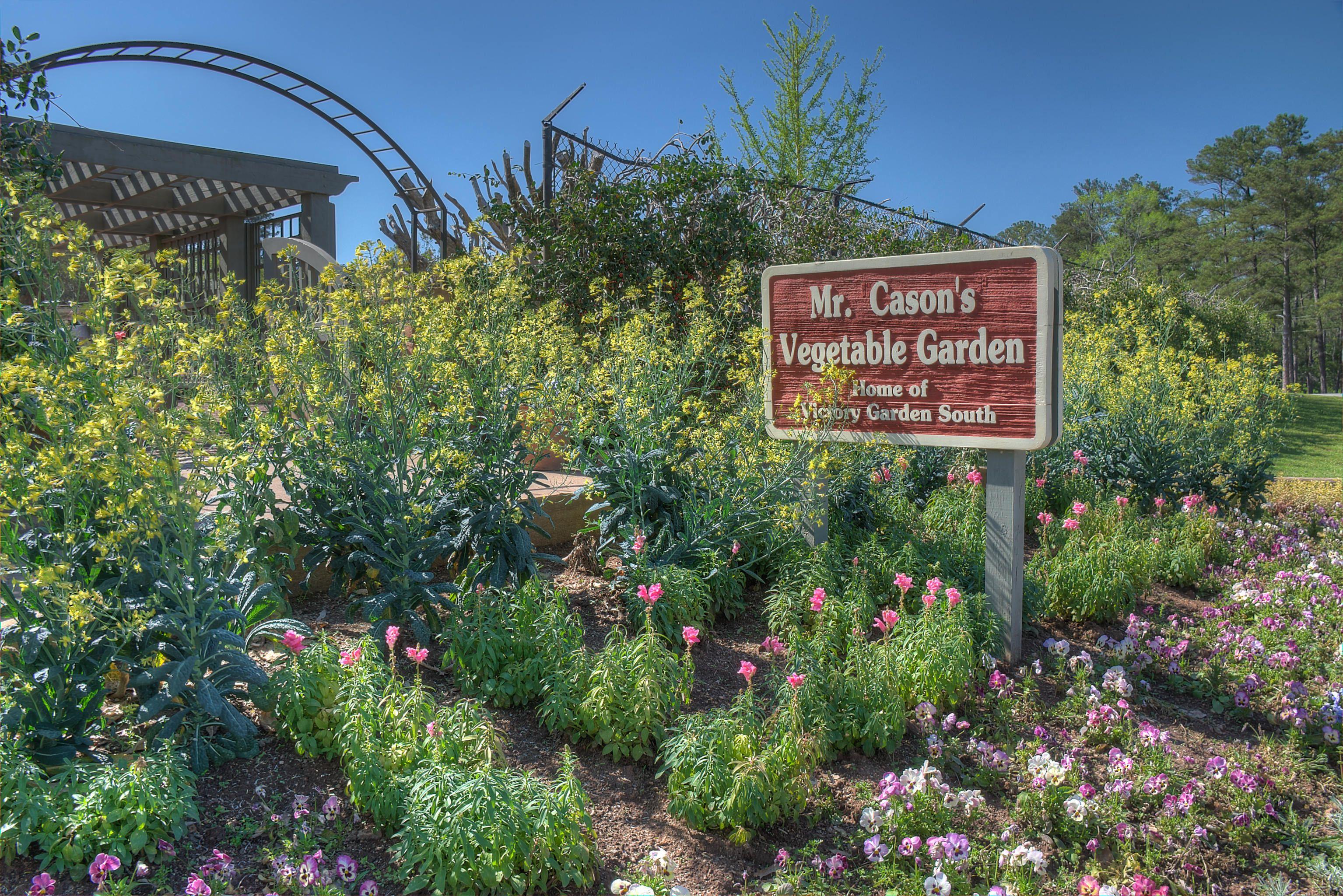 Vegetable Gardening Tip For Beginners Vegetable Garden For