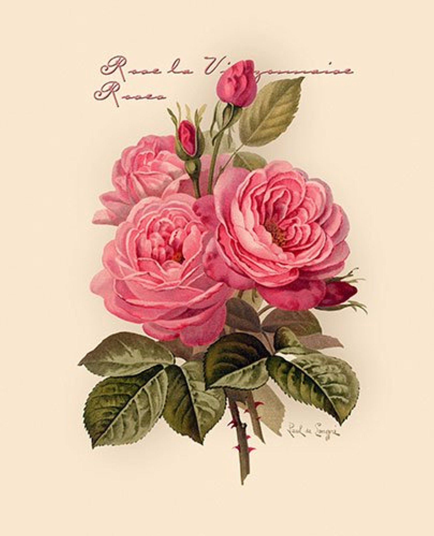Art Print of Vintage Art American Beauty Roses by Paul de Longpre