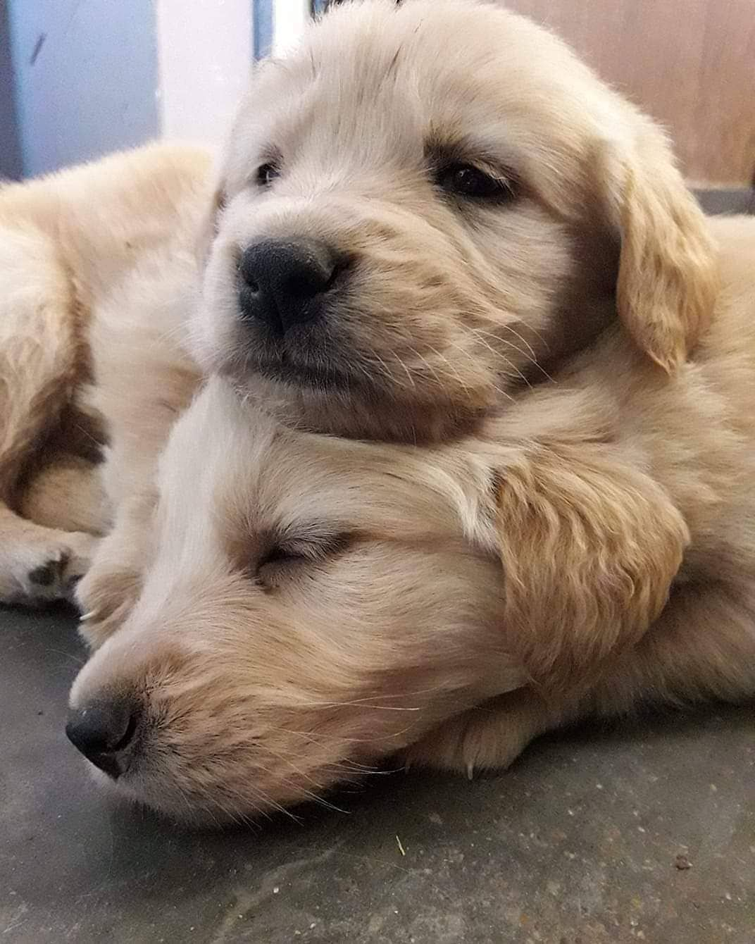 Dog Idea Dog Homes Dog And Baby Dog Projects Dog Cat Dog Ate Dog Home Ideas Home Dog Dog And Puppy Puppy Dog Dog Cute Dog Dogs Love Diys For Dogs 2020