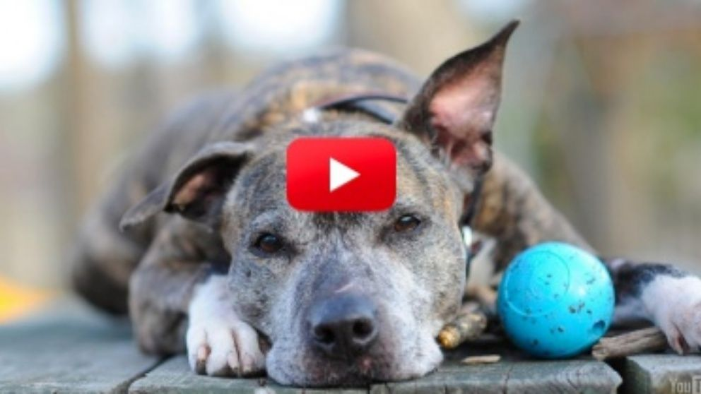 This Is A Perfect Example Of Why You Shouldn't Give Up On Older Dogs! Such Love!