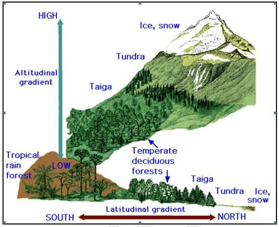 Different Flora Up The Side Of A Mountain Diagram