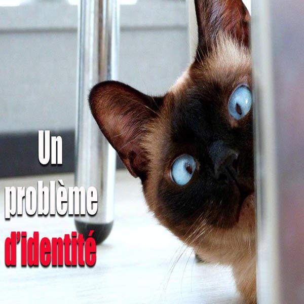Mon chat est un chien / Funny cat / 😹 #rire #drôle #blague #humour #mdr #rigolo #video #fun #funny #humor #droledattitude #videodrole #funnyvideos #funnyvideo
