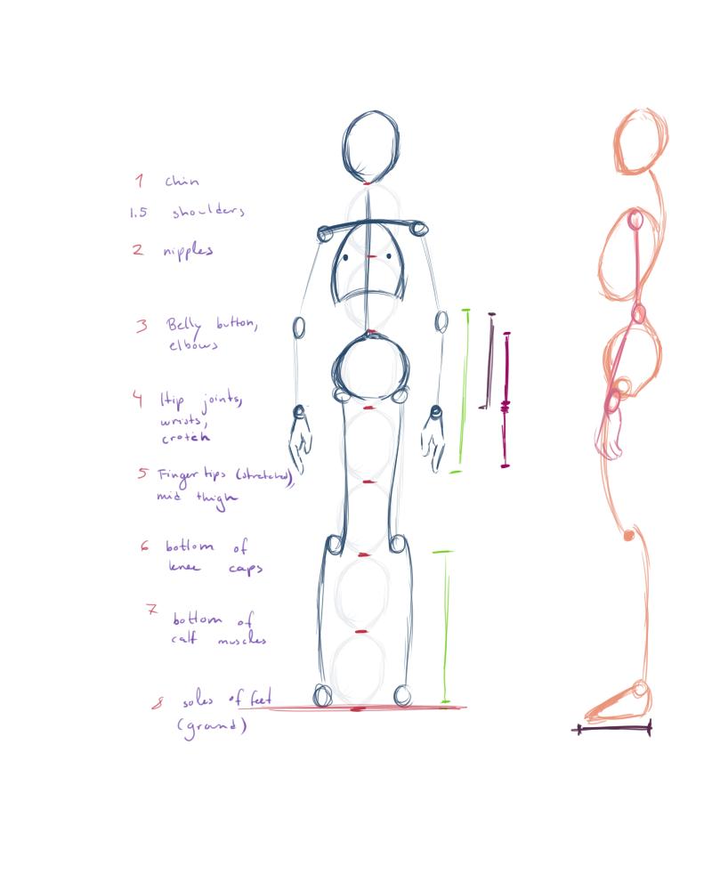 Joumana Medlej\'s proportions guide summary https://design.tutsplus ...