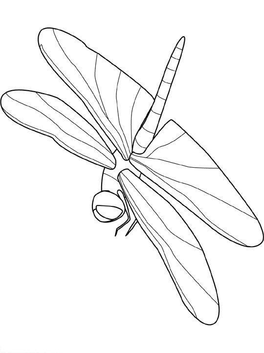 insekten malvorlagen  malvorlagen insekten zeichenvorlagen