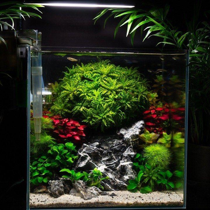 "#natureaquarium #ancientstone #aquascaping #gupp…"" #tropictank #aquascape #instagram #aquarium #aqua..."
