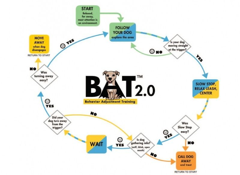 B A T Proactive Training Gives Dogs The Tools They Need To