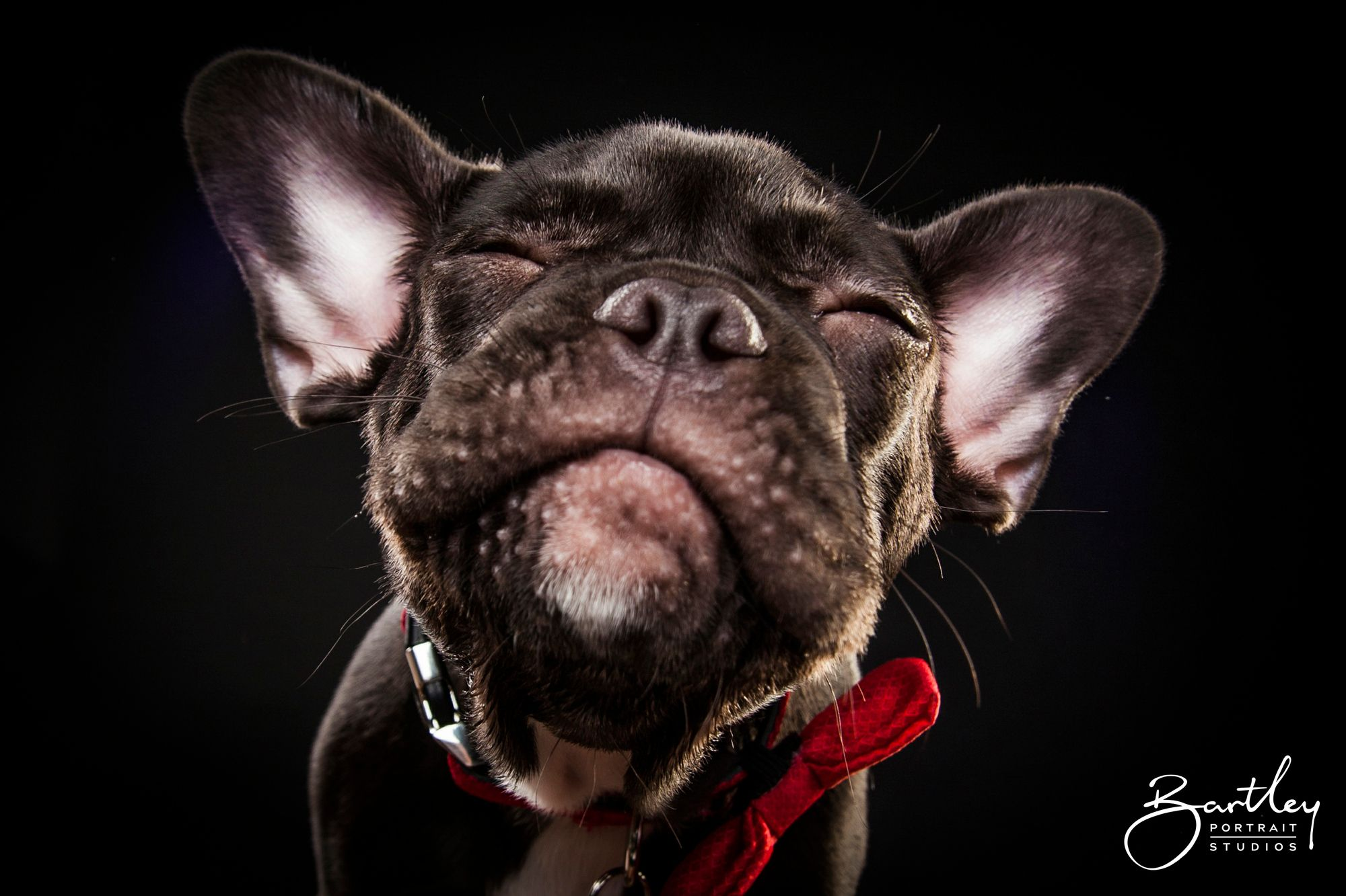 Schutzhund Trophies Joe Argo With Trophies Won Guard Dog Training Dogs With Jobs Off Leash Dog Training