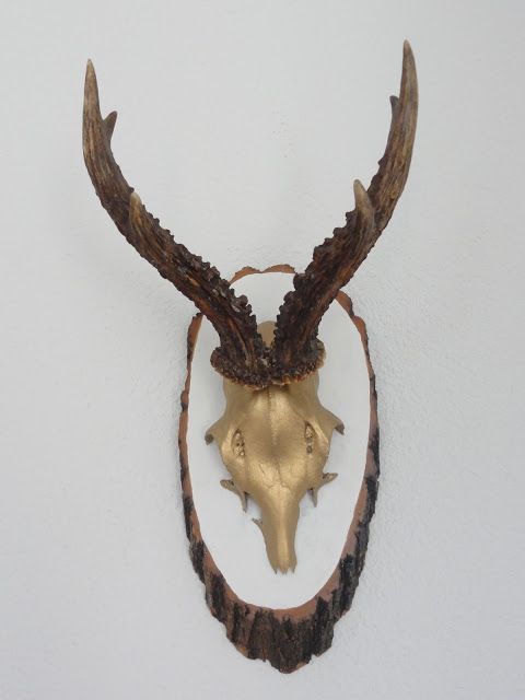 Wohnbrise geweih Collage Pinterest Deer skulls, Horn and