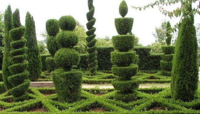 Figuras con arbustos poda ornamental o poda topiaria for Arboles ornamentales jardin